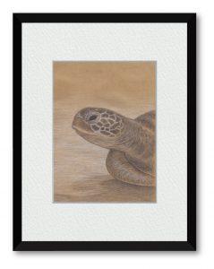 キタジエミコさん「ひと休み」(B5)静かな水底で休むウミガメ。太平洋を横断する旅の途中をイメージしました。